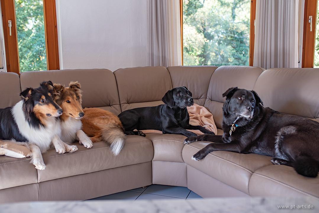 Gruppenfoto auf dem Sofa